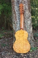 Eight String Carmanah Guitar: Back View